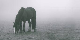 My Old Horse Struggles in Winter. What Can I Do to Help Them?