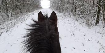 Exercising Your Horse During Winter