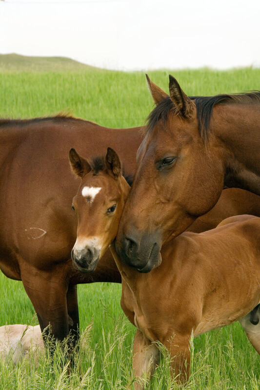 Image 2 At What Age Should I Wean My Foal?