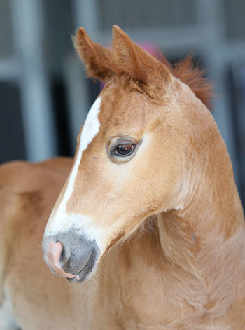 horse herpes Herpes Vaccination
