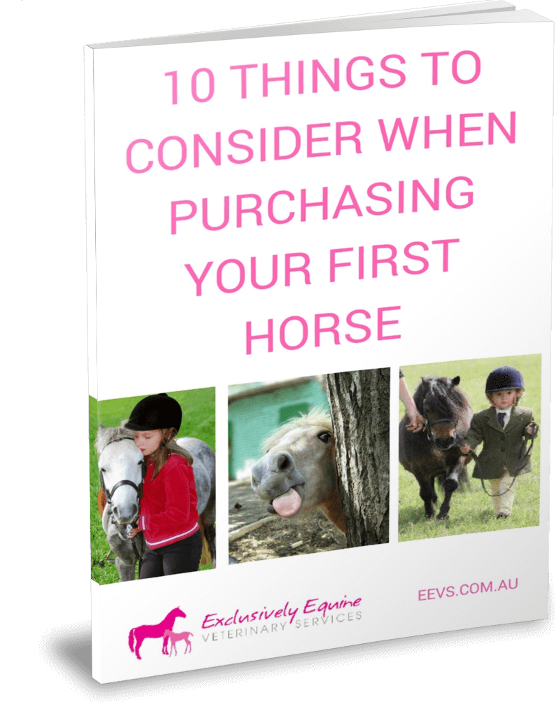 10 things to consider when purchasing your first horse Pre purchase & Insurance Examinations