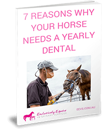 7 Reasons Why Your Horse Needs A Yearly Dental