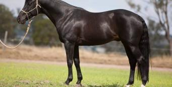 Breeding Success: Is Your Mare or Stallion Fit for Breeding?