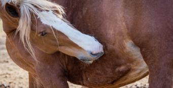 Help! My horse is itchy and I don't know why. What should I do?