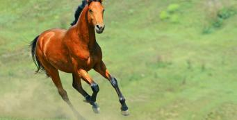 Horse Health: The Spring Health Check