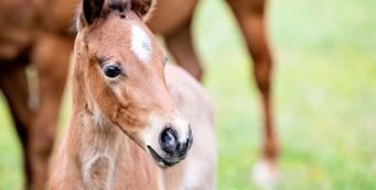 When Should I Vaccinate and Worm My Mare Before She Foals?