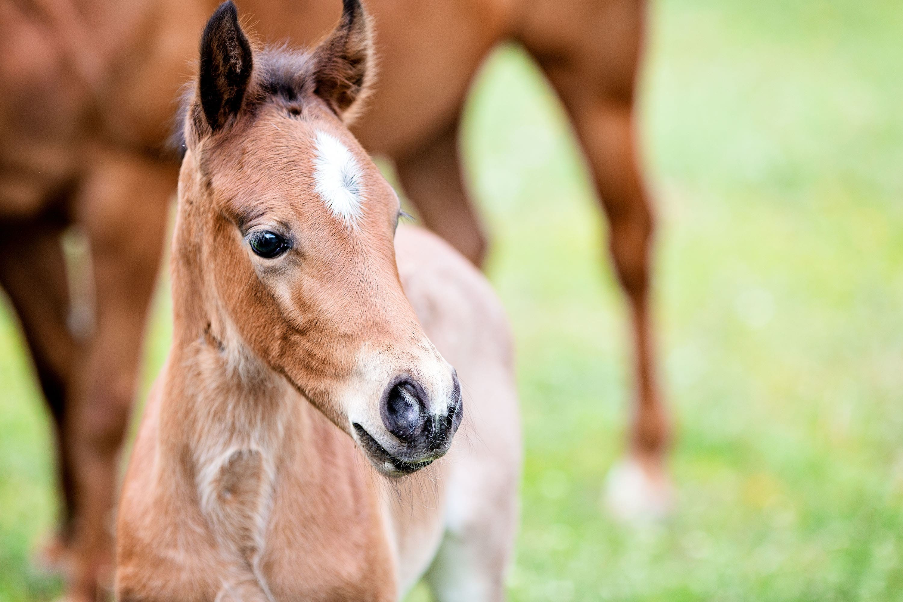 blog 041017 When Should I Vaccinate and Worm My Mare Before She Foals?