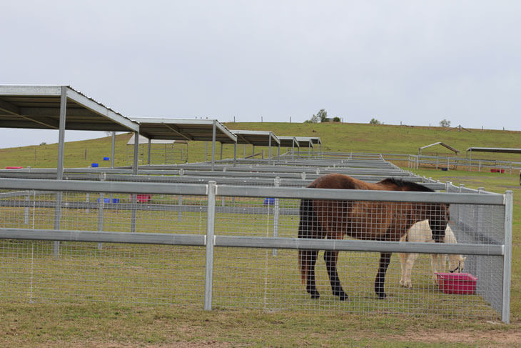 mare foal down2 Facilities