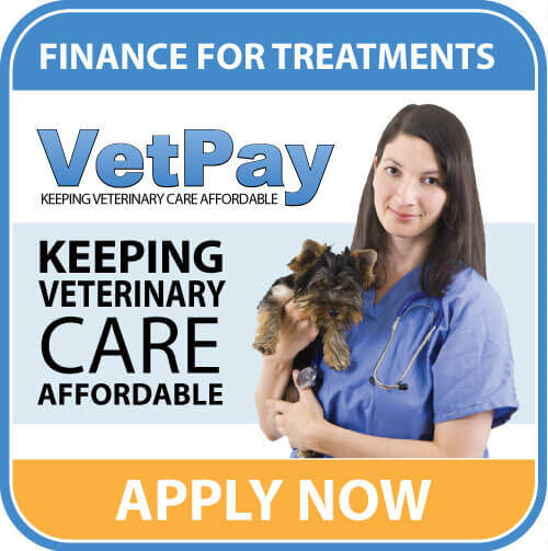 vet pay Skin Problems