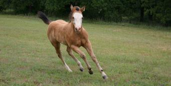 At what age can my colt be castrated?