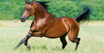 Stallion Health: Preventing the Spread of Sexually Transmitted Diseases