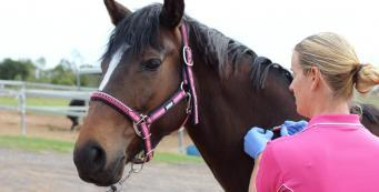 How often should I vaccinate my horse?