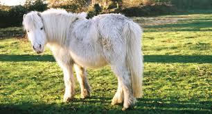 Does my horse have Cushing's disease?