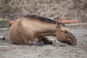 exclusively-equine-veterinary-services_colic-blog-post-1