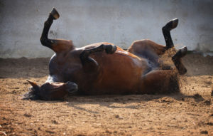 exclusively-equine-veterinary-services_colic-blog-post-2