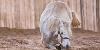 Can worming my horse cause colic?