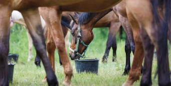 Will changing feeds cause my horse to colic?