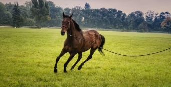How to Choose the Right Performance Horse