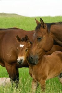 HorseBarn Education Image 50 200x300 Breeding Guarantee