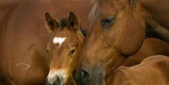 At What Age Should I Wean My Foal?