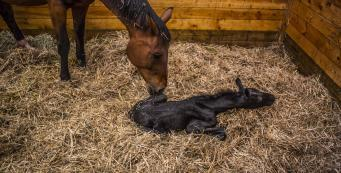 What Should I Do if My Mare Won't Let Her Foal Drink?