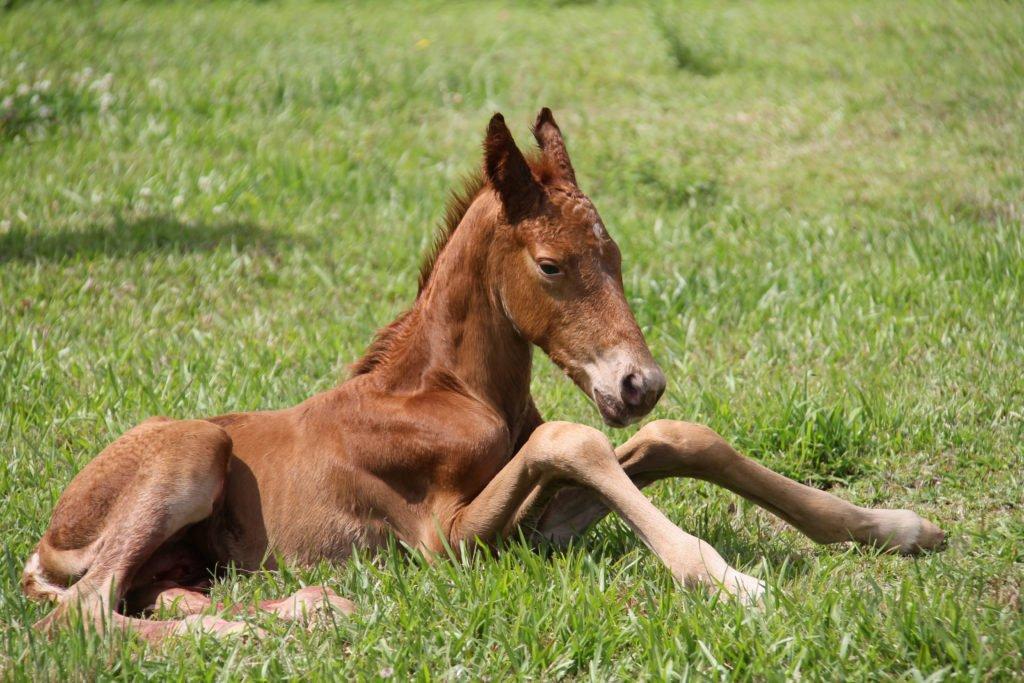 shutterstock 737963044 1024x683 My One Week Old Foal Has Diarrhoea. What Should I Do?