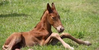 My One Week Old Foal Has Diarrhoea. What Should I Do?