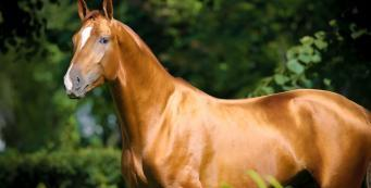 What Do I Need to Feed My Horse for a Shiny Coat?