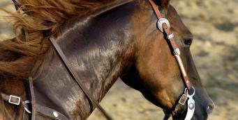 What Type of Salt is Safe for Horses?