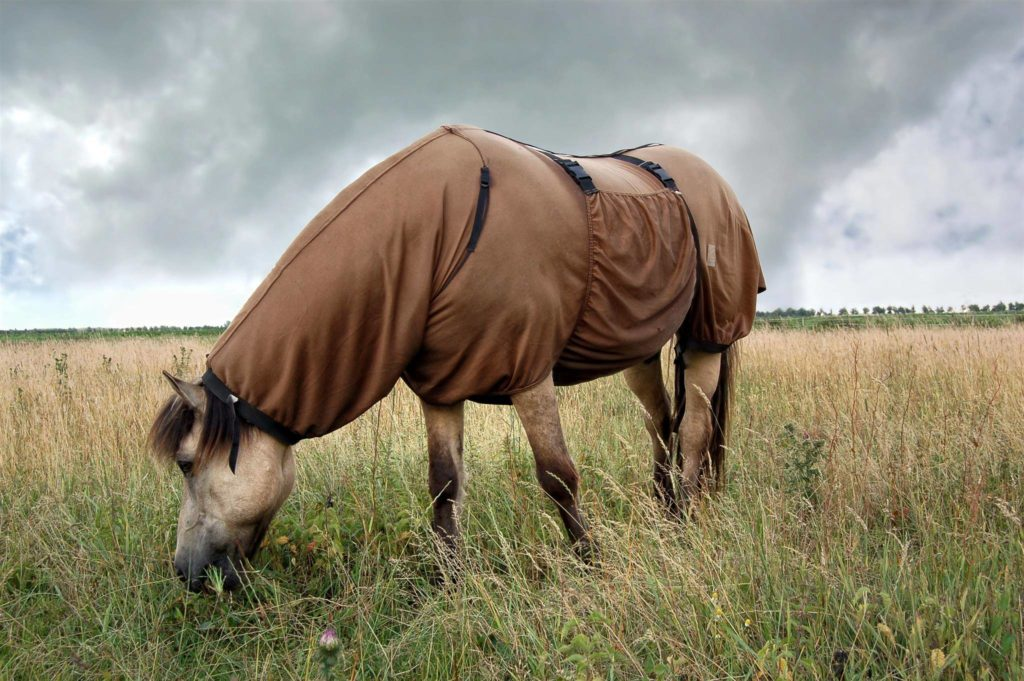 shutterstock 16319116 1024x681 Should I Rug My Horse in Summer?