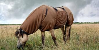 Should I Rug My Horse in Summer?
