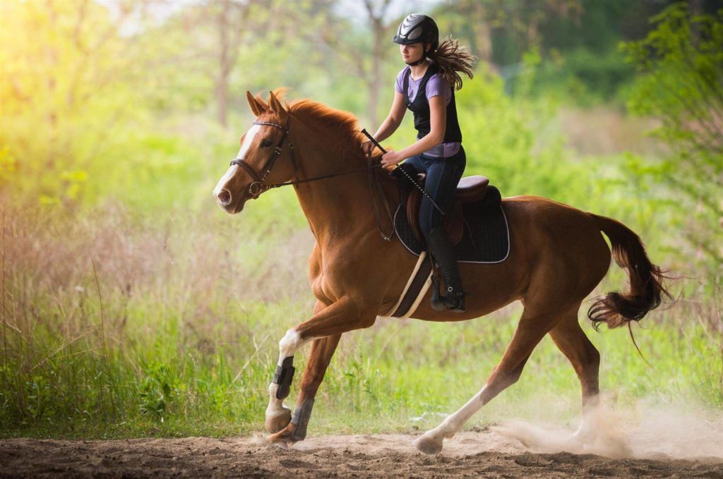 shutterstock 630759824 1024x679 What is the Fastest Way to Get My Horse Fit?