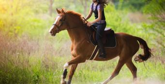 What is the Fastest Way to Get My Horse Fit?