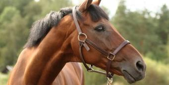 How Old is Too Old for a Horse to be Ridden?